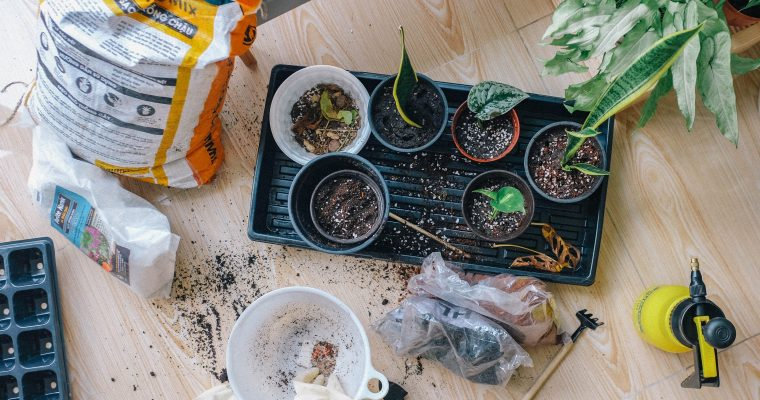 5 Benefits of Growing Your Own Food – the Secret Key for Weight Loss